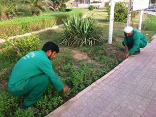اجرای طرح وجین علف های هرز از فضای سبز شهر پرند
